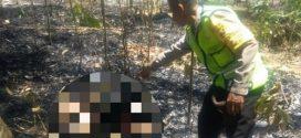 Tragis! kakek Tijah Ditemukan Terbakar di Kebun Bambu Miliknya